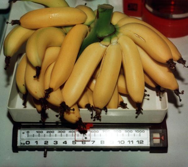 banany_vaha